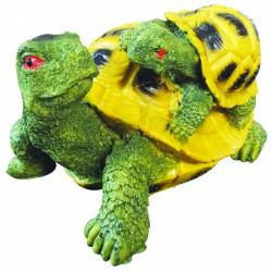 Yavrulu Kaplumbağa